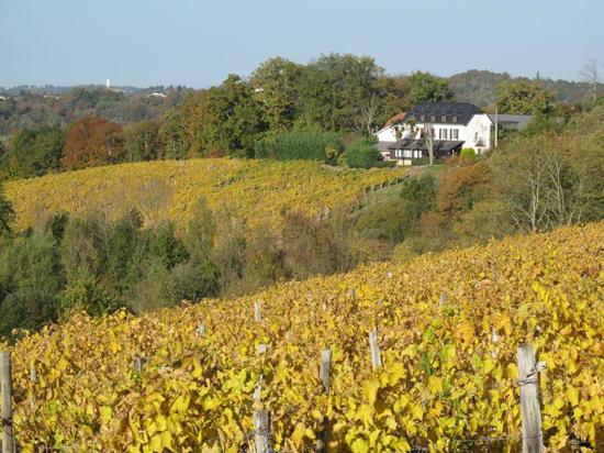 Panorama del Cru Lamouroux – Jurançon