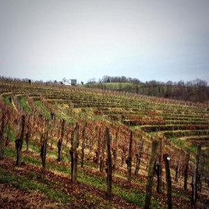 Amphitheater of vines in Cru Lamouroux – Jurançon