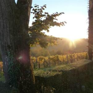 Vines of the domain – Cru Lamouroux – Jurançon