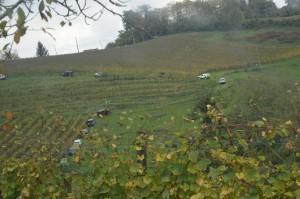 Jeep dans les vignes